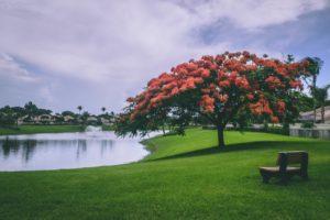 tree near a lake