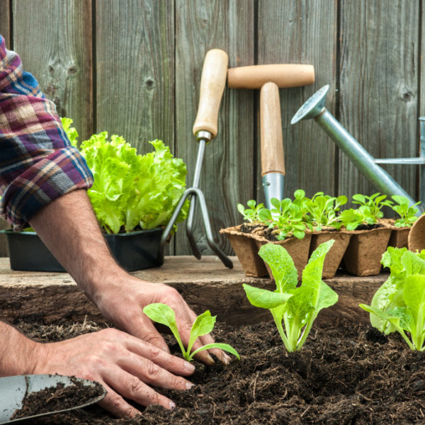 Starting an Organic Farm: What You Need to Know